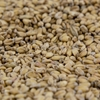 Picture of Gambrinus Wheat Malt