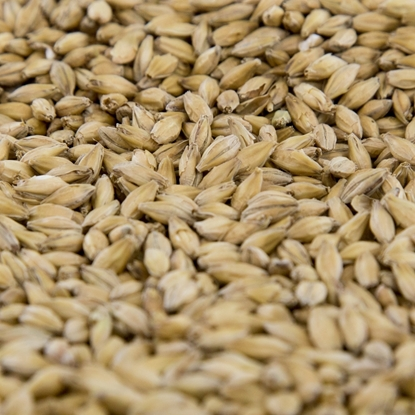 Picture of Gambrinus Organic Pale Malt