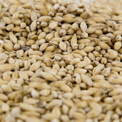 Picture of Gambrinus BC Pilsner Malt